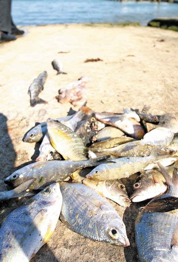 HUNDREDS OF DEAD FISH WASH ASHORE