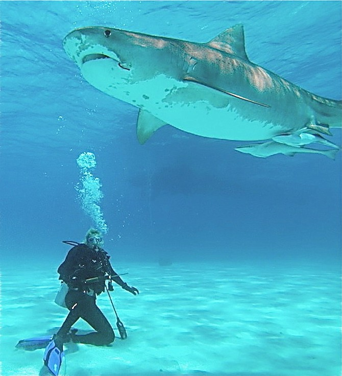 Bahamas has one of the most shark-infested beaches in the
