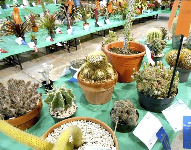 succulent names blooming hard work on display at giant plant show the tribune