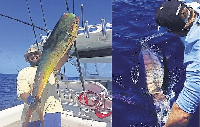 On da hook the tribune for Right hook fishing charters