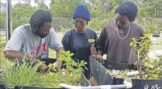 Cameron Lightbourne demonstrates how to remove debris from the tutorial aquaponics unit during a class in Pond, Tank Management. Also pictured are recent BAMSI graduate Gimel Morley (centre) and senior BAMSI student Ian Hepburn.