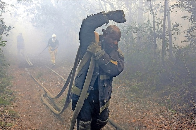 Firefighters work to tackle a forest fire near the landfill. Photo: Terrel W. Carey/Tribune Staff