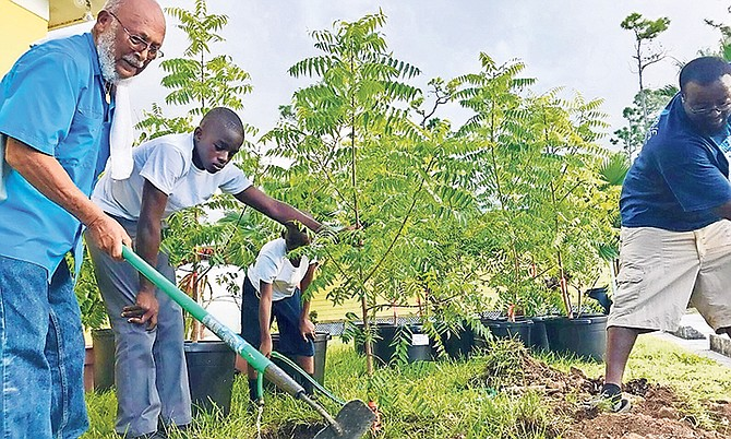 Save The Bays chairman Joe Darville and volunteers till the earth to plant neem trees to provide shade for the increasing number of domestic animals being taken to the Grand Bahama Humane Society.