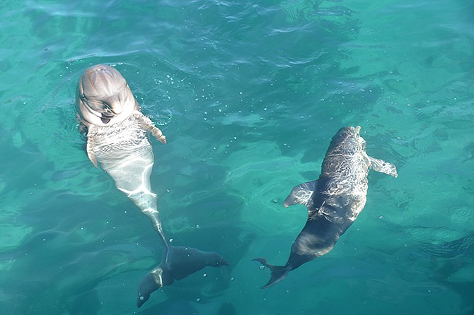 Duchess swims around with her mother, Princess.