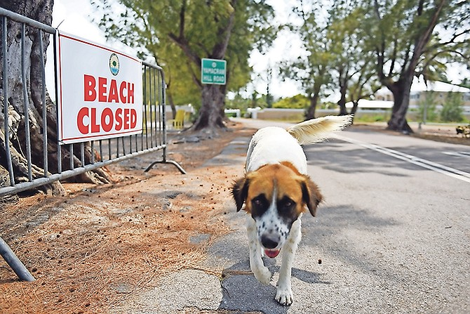 Closed beaches have been a common sight over the last few months. Photo: Shawn Hanna/Tribune Staff