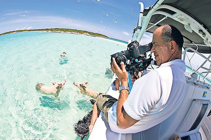 THE SWIMMING pigs in Exuma have found fame around the world - but tour operators are concerned that they now need help from the government to keep them fed.