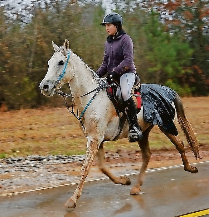 Reine Pagliaro and Beautiful Knightmare (owner: Mary Kathryn Clark) worked on increasing speed during the Broxton Bridge Endurance Race, SC. The pair finished tied for second place. Pagliaro and Beau continue to train in all weather, even in the freezing rain last week in Georgia.